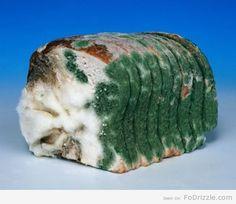Rotten Moldy Bread - penicillin
