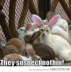 They suspect nothing