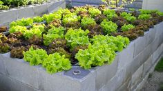 Tips for creating a successful concrete block raised garden bed.
