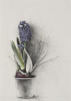 alexandrainspire: Blue Hyacinth, Linda Etcoff 2012