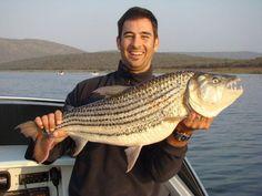 #pongolagamereserve #pongola #gamereserve #southafrica #kzn #activities #fishinglodge #lake #flyfishing #lakejozini #tigerfishing #fishingboat #river #tigerfish Fishing Boats, Fly Fishing, Tiger Fish, Game Reserve, River, Activities, Camping Tips, Rivers, Bass Boat