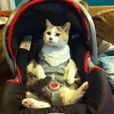 car cat] - Pesquisa Google
