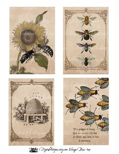 Wouldn't these be great in a creamy white and black kitchen with warm yellow accents? (Vintage Bees Printable Images Digital Download)