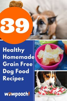 39 Healthy #Homemade (Grain-Free) #Dog #Food #Recipes Your Dog Will Love. #Grain-free dog food recipes can be a fun reward for you and your dog.Making food and treats at home lets you control what goes into the recipe so you always know what your dog is eating, and you can choose what to make based on your dog's preferences.Here are some quick and easy recipes for healthy and nutritious dog food that you can make in your very own kitchen.Please feel free to comment, like and share
