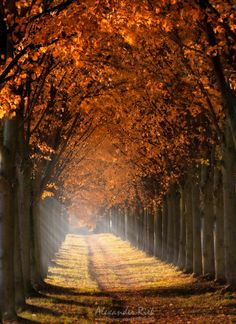 "Into the Light - A tree alley shot from last autumn.  Feel free to follow me on  <a href=""https://www.facebook.com/pages/Alexander-Riek-Photography/588013561261816"">FACEBOOK</a>  or to visit my  <a href=""http://www.photographichorizons.com"">WEBSITE</a>"