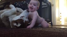 An adorable video of a very small child attempting to sneak up on his family's pet Husky has gone viral and couldn't be more precious. The small baby gently crawls up to the husky in hi. Cute Baby Videos, Funny Dog Videos, Funny Dogs, So Cute Baby, Baby Love, Cute Babies, Funny Babies Laughing, Husky, Baby Kiss