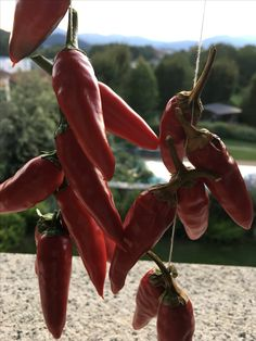 Peperoncino Made in italy