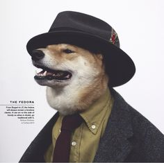 The Fedora. From Bogart to JT, the Fedora will always remain a timeless classic. It can err on the side of trendy so when it doubt, go traditional with it. Menswear Dog, The Sartorialist, Dog Presents, Types Of Hats, Guys Be Like, Felt Hat, Shiba Inu, Timeless Classic, Rescue Dogs
