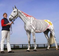 Horses have spines too!