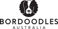 The longest established breeder of Bordoodles in Australia Most Beautiful Dogs, Westies, Border Collie, Animal Kingdom, Poodle, This Is Us, Australia, Puppies, This Or That Questions