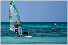A windsurfing guy and his dog out cruisin' the beach in Aruba. @GregNess #Aruba #windsurfing