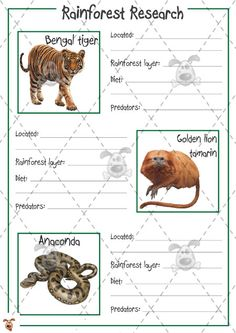 Teacher's Pet - Rainforest Animal Research (colour) - Premium Printable Classroom Activities and Games - EYFS, KS1, KS2, research, facts, rain, forest, animals