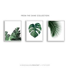 Digital download Art // Monstera palm leaf - color  Welcome to SCANDINAVIAN PRINT ART!  ★ Buy 2 - get 4 PRINTS! - Select 4 prints in your cart and use code BUY2GET4 at checkout to get 2 of them free! ★  Print out the art on your printer at home, or use a local or online printshop, and decorate your walls in the minimalistic style Scandinavia is known for. It is a unique, beautiful, easy, quick and budget friendly way of decorating your walls.  YOU WILL RECEIVE 5 DIGITAL FILES:  1) JPG - 8x10…