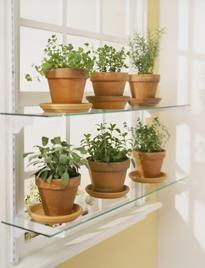 Windowsill herb growing