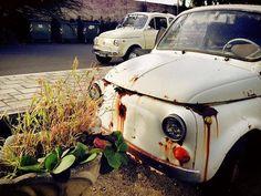 Fiat500nelmondo (@fiat500nelmondo) • Foto e video di Instagram Fiat 500, Small Cars, Antique Cars, Antiques, Video, Vehicles, Club, Instagram, Pictures