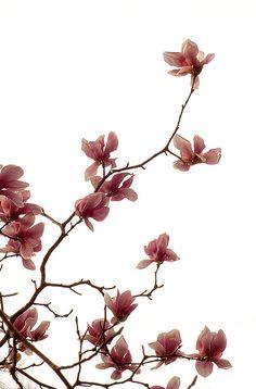 Harlow Magnolia Gillund <3