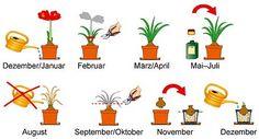 Amaryllis: Pflegetipps rund ums Jahr - Mein schöner Garten