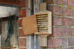 Bee box photo