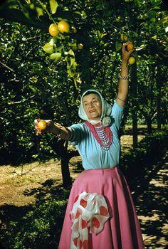 Madame picking lemons. Photo: courtesy Ganna Walska Lotusland