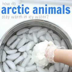 Ever wondered how arctic animals stay warm in icy water? This fun science experiment shows how a layer of fat makes a huge difference in body temperature! experiments How Arctic Animals Stay Warm in Icy Water Cool Science Experiments, Science Fair Projects, Science Lessons, Science For Kids, Life Science, Food Science, Science Ideas, Kindergarten Science Experiments, Summer Science