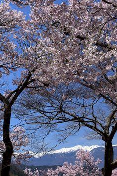 505:「高遠城址公園から中央アルプスを望む」@高遠城址公園