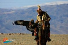"Hunting with the golden eagle.  Hunting with the golden eagle is an ancient tradition that dates back to the Mongol conquest of Central Asia around the 12th and 13th centuries when a fine eagle and good horse cost the same price and both lent prestige to their owner.  Hunting takes place riding a specially trained horse (called a ""bercut). To allow a rider to carry an eagle a special device (a baldak) is fitted onto the saddle to support the riders arm. Sent out to hunt fawns foxes or other…"