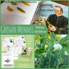 Father Of Genetics- Gregor Mendel | Harrington Harmonies