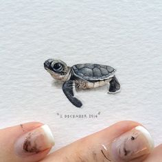Day 345 : Occasionally you may find a leatherback turtle and perhaps even a green sea turtle hatchling (pictured here) stranded around the Cape Town coast. The Two Oceans Aquarium will be able to rehabilitate these babies. 25 x 27 mm. Sea Turtle Painting, Sea Turtle Art, World Turtle Day, Leatherback Turtle, Baby Turtles, Mini Paintings, Miniature Paintings, Watercolor Paintings, Painting Art