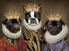 Funny Animal Pictures, Funny Animals, Cute Animals, Costume Chien, Pharaoh Hound, Boston Terrier Dog, Weird Art, Little Dogs, Animal Paintings