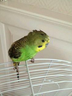 Mijn vogeltje :-)