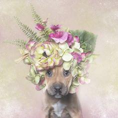 Sophie Gamand Flower Power, Pit Bulls of the Revolution