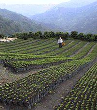 Ten Steps To Coffee - National Coffee Association