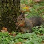 Debreceni Egyetem Botanikus Kert  Természeti kincseink  Megannyi barlang, nemzeti park, arborétum és még sok más látványosság várja, hogy felfedezdKirándulás, túra ötletek #túrázás #Magyarország #természet #kirándulás Animals, Animales, Animaux, Animal, Animais