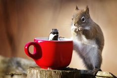 Songbird and a Red Squirrel  http://500px.com/Andre_Villeneuve