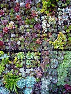 Succulent wall garden - een verticale tuin van kruiden en vetplanten. heel mooi en gezellig en ruimtebesparend