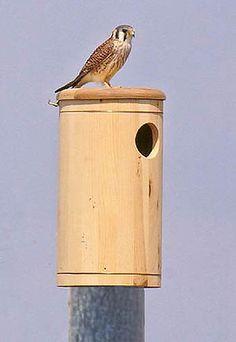 American Kestrel Nest Box Plans Nature How Tos
