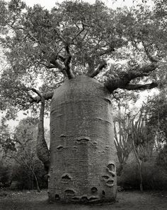 """A photographer from San Francisco traveled around the world and searched for the trees that are considered to be the oldest surviving ones. Beth Moon has taken pictures of these trees in duotone and has published the book """"Ancient Trees: Portraits Of Time"""""""
