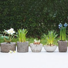 DIY Concrete Planters  oil the inside of one container, fill with concrete and shake to level, oil outside of another and press it in