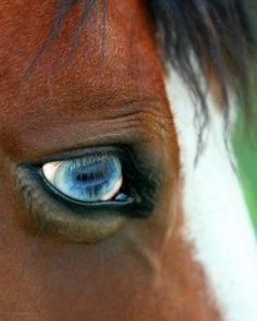 Through the eye of a horse we see our own soul.