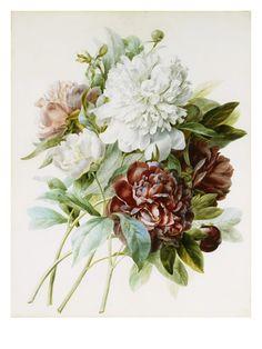 Joseph-Pierre Redouté genio de la pintura floral
