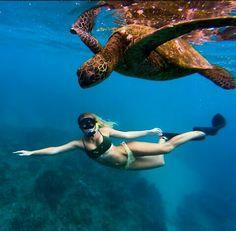 Snorkeling with turtles - Photo Underwater Painting, Underwater Life, Underwater Pictures, Ocean Creatures, Underwater Photography, Ocean Life, Marine Life, Scuba Diving, Cave Diving