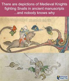#Knights #vs #snails