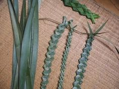 weaving with natural materials Flax Weaving, Weaving Textiles, Basket Weaving, New Zealand Flax, Flax Flowers, Diy And Crafts, Crafts For Kids, Weaving For Kids, Maori Art
