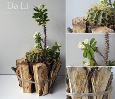 Beautiful Indoor Decorative Plant Pots Ideas - Amazing House ...
