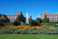 My wonderful alma mater---University of Washington!