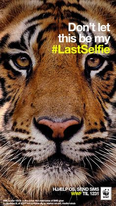"The Danish branch of the World Wildlife Fund took a sobering spin on the selfie that seems to have become so pervasive in marketing, the #lastselfie ads feature one of five different endangered animals. They all send the same message, ""Don't let this be my #lastselfie."" http://www.adweek.com/news/advertising-branding/wwf-snaps-lastselfie-endangered-animals-157138"