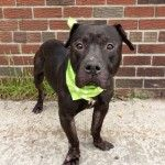 Every day, we hear horror stories regarding the incompetence and lack of care at the NYC AC&C. Kill List, He Is Coming, Leather Dog Collars, Studded Leather, Dog Stuff, Rescue Dogs, Fur Babies, Shelter, Pitbulls