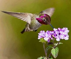 Hummingbird via Carol's Country Sunshine on Facebook