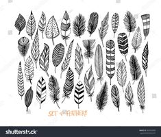 Collection of hand drawn feather. Ink illustration. Isolated on white background. Set of decorative animals feathers. Hand drawn vector art.