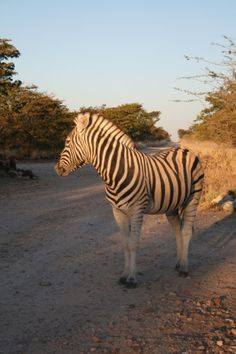 single post days luxury travel africa nett including airtickets